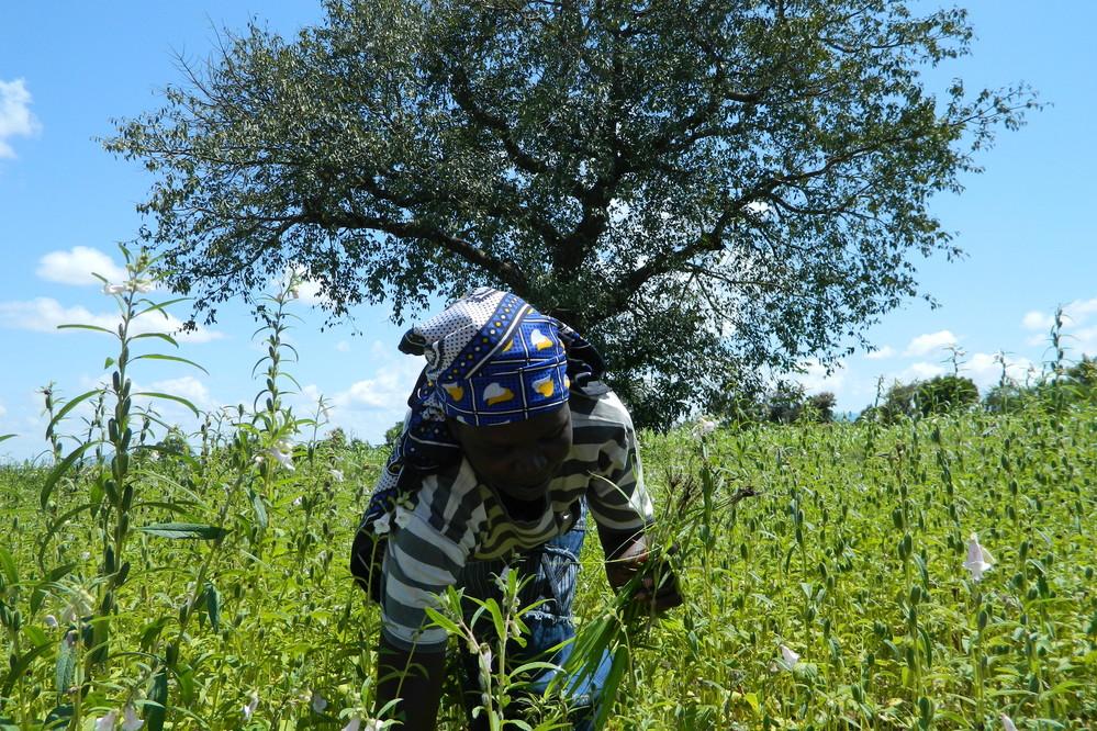 Le FIDA aide les petits producteurs du Soudan du Sud à préserver leurs moyens d'existence face à la crise engendrée par la COVID-19